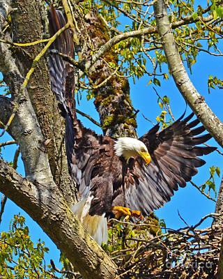 Photograph - Nest Landing by Jack Moskovita