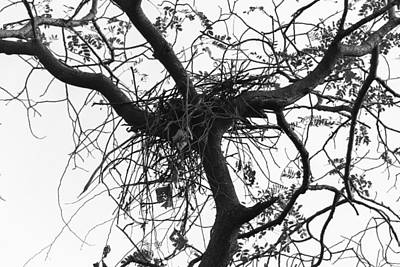 Nest Made Of Branches Above A Tree In The Delhi Zoo Art Print