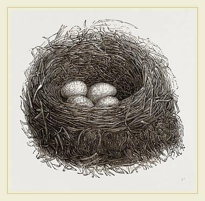 Blackbird Drawing - Nest Of Blackbird by Litz Collection