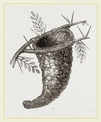 Flycatcher Drawing - Nest Of Flycatcher by Litz Collection