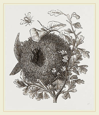 Wren Drawing - Nest Of Wren by Litz Collection