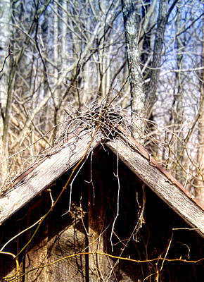 Photograph - Nest On Top by Kristie  Bonnewell