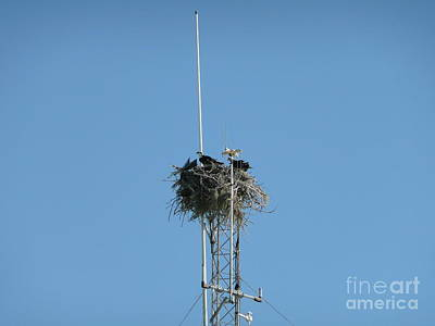 Photograph - Nest With A View by Rachel Gagne