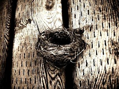Nature Photograph - Nest by Zinvolle Art