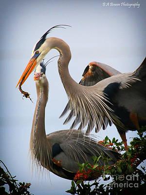 Birdwatching. B A Bowen Photograph - Nestbuilding by Barbara Bowen
