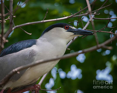 Photograph - Nestbuilding Time by Dale Nelson