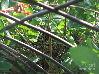 Nesting Art Print by Deborah DeLaBarre