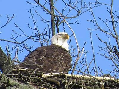 Katharine Hepburn - Nesting eagle by Rrrose Pix