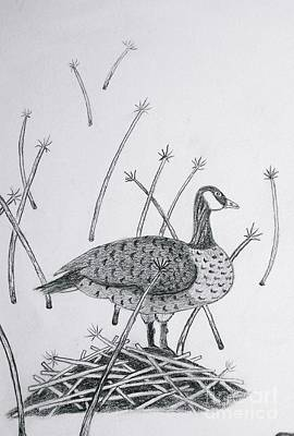 Drawing - Nesting Goose Detail From Canadian Greetings by Gerald Strine