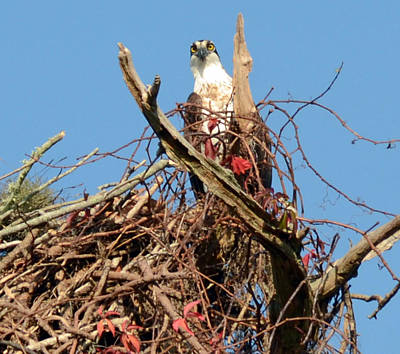 Photograph - Nesting by Julie Cameron