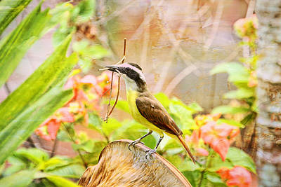 Photograph - Nesting Kiskadee 1 by Peggy Collins