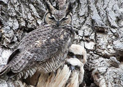 Photograph - Nesting by Lula Adams
