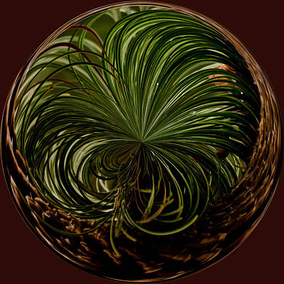 Photograph - Nesting Pine Orb by Tikvah's Hope