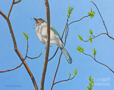 Art Print featuring the painting Nesting Scrub Jay by K L Kingston