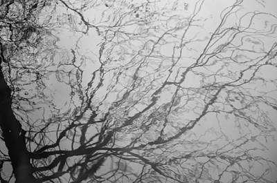 Winter Photograph - Network by Pauline Brock
