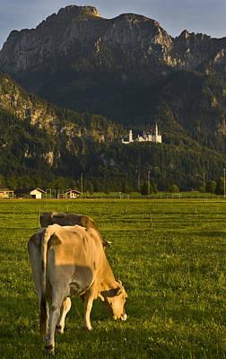 Photograph - Neuschwanstein Castle With Cows by Pam  Elliott