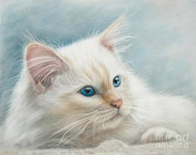 Cat Art Drawing - Neva Masquerade Cat by Tobiasz Stefaniak