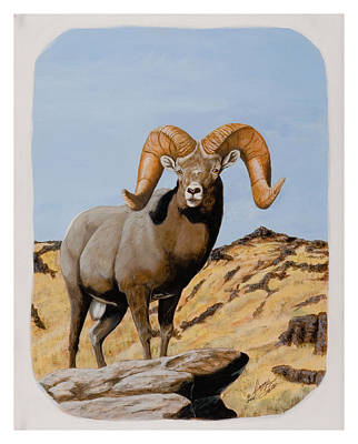 Painting - Nevada California Bighorn by Darcy Tate
