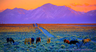 Photograph - Wild Horse Country  by Jeanne  Bencich-Nations