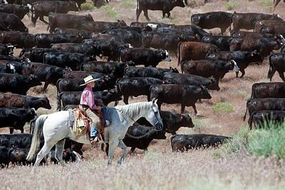 Cattle Drive Photograph - Nevada Cowboy Herding Cattle by Jim West