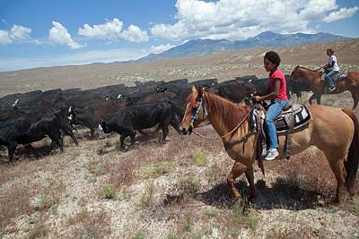 Cattle Drive Photograph - Nevada Cowgirls Herding Cattle by Jim West