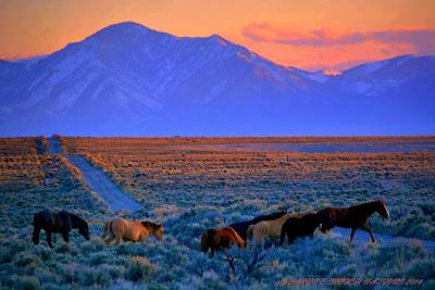 Photograph - Nevada  by Jeanne  Bencich-Nations