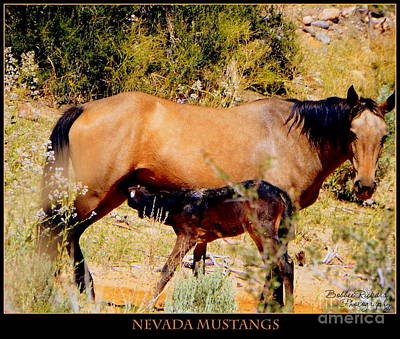 Photograph - Nevada Mustangs IIi  by Bobbee Rickard