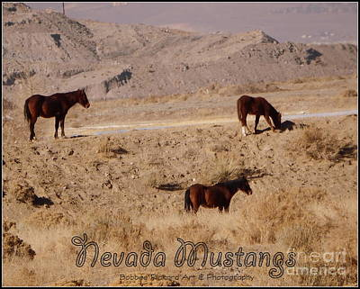 Photograph - Nevada Mustangs Poster  by Bobbee Rickard