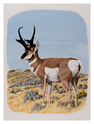 Nevada Pronghorn  Art Print