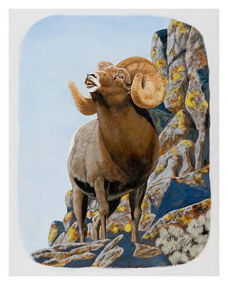 Painting - Nevada Rocky Mountain Bighorn by Darcy Tate
