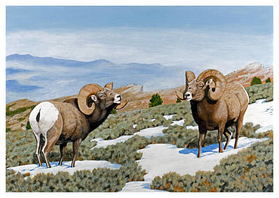 Painting - Nevada Rocky Mountain Bighorns by Darcy Tate