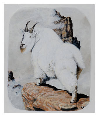 Painting - Nevada Rocky Mountain Goat by Darcy Tate