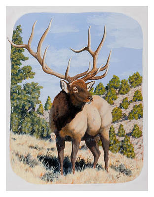 Nevada Typical Elk Art Print