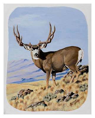 Nevada Typical Mule Deer Art Print
