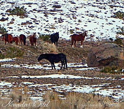 Photograph - Nevada Wild by Bobbee Rickard