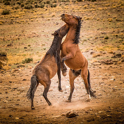Wild Horses Photograph - Nevada Wild Horses 3890 by Janis Knight