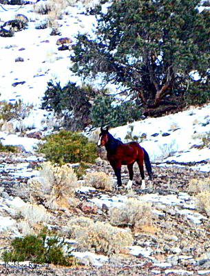 Photograph - Nevadas Finest Wild Mustang Digital Oil Painting by Bobbee Rickard