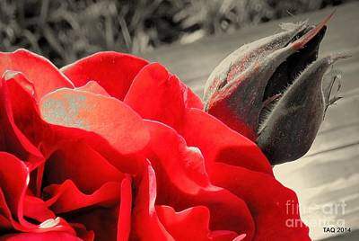 Photograph - Never My Love by Tami Quigley