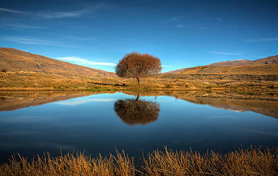 Photograph - Nevis Tree by Brad Grove