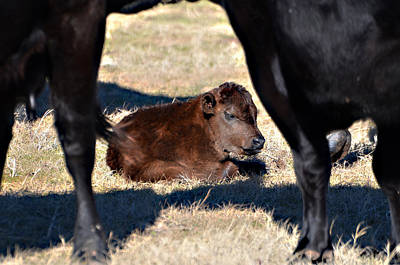 Photograph - New Baby by Linda Cox