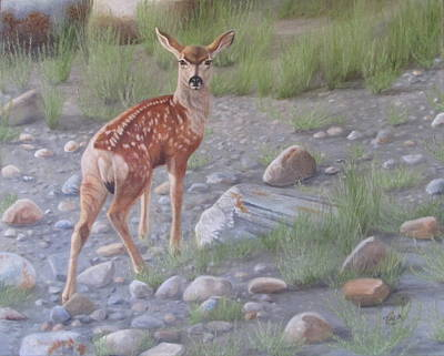 Mule Deer Fawn Painting - New Beginnings 2 by Tammy  Taylor