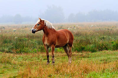 Photograph - New Brunswick Horse by Ben Graham