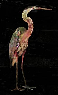 Photograph - New Coat For The Heron by Carol Kinkead