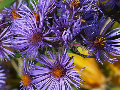 Photograph - New England Asters by Gene Cyr