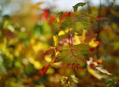 Autumn Scene Digital Art - New England Fall On Film by Linda Unger