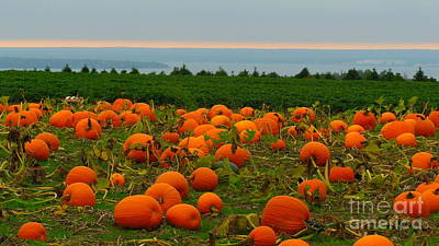New England Pumpkin Patch Art Print by Eclectic Captures