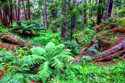 Photograph - New Fern Gully  by Paul Svensen