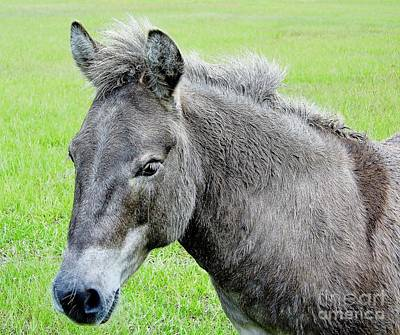 Chestnut Dun Horse Photograph - Cute Little Donkey by D Hackett