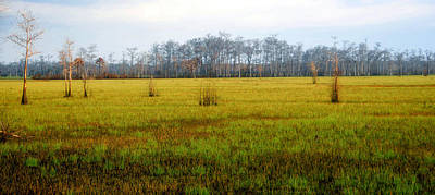 Photograph - New Grass In Big Cypress by David Lee Thompson