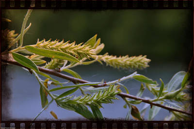Photograph - New Growth Along The River by Mick Anderson